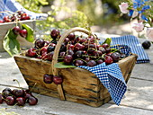 Sweet cherries (bird cherry) in wooden basket