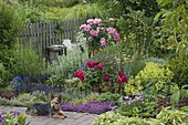 Herb bed with roses