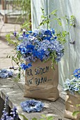 Blue Bouquet from Hydrangea 'Endless Summer', Delphinium