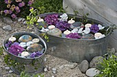 Zinc tubs with Hydrangea flowers, floating candles