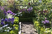 Farm garden with flowering perennials and summer flowers