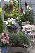 Country-style balcony with Antirrhinum, Centaurea