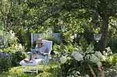 weiße Liege unterm Apfelbaum (Malus), Beet mit Hydrangea (Hortensien)