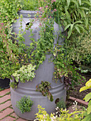 Herb garden laid out in plastic tub with holes