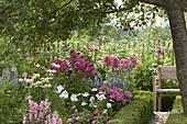 Perennial flowerbed under apple tree
