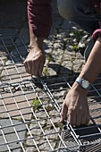 Assemble and fill the gabions yourself
