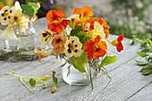 Small bouquet of Tropaeolum 'Cream Purple Spot' 'Milkmaid' 'Tip Top Apricot'