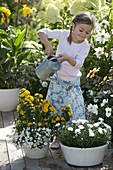 Girl watering bowl of dianthus (carnation)