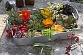 Herbs and Medicinal Herbal Lemon Thyme, Tropaeolum