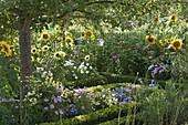 Cottage garden with summer flowers and perennials under apple tree