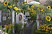 Farm garden with Helianthus, Helenium