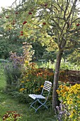 Perennial flowerbed under rowan, rowan, helenium