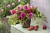 Bouquet made of Dahlia, Humulus lupulus (hops)