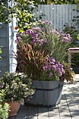 Wooden bucket with aster and Miscanthus 'Morning Light'
