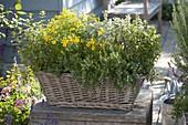 Basket box with tea herbs