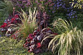 Autumn bed, Heuchera (purple bells), Stipa (hair grass), Sedum
