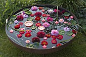 Fire-pan filled with water, Zinnia and Dahlia blossoms