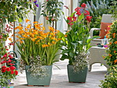 Tropical terrace with Crocosmia 'Emily McKenzie', Canna indica