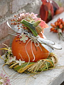 Hokkaido pumpkin as a gift