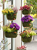 Baskets hung with moss as hanging baskets one above the other