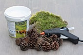Design planter yourself with moss and pine cones