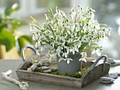 Galanthus (Snowdrop) bouquet
