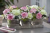 Small wooden pot with Dianthus 'Goblin' 'Fantasy', Chrysanthemum