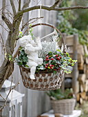 Hanging metal basket with angel planted with Gaultheria