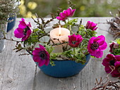 Enamel bowl as lantern with anemone coronaria