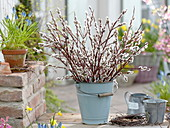 Bouquet of salix caprea twigs in enamel bucket