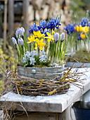 Metal bowl with Crocus vernus 'Striped Beauty', C. chrysanthus 'Sunspot'