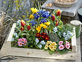 Gift box with spring flowers and herbs
