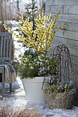 Early spring on the terrace