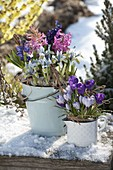 Enamel container with spring bloomers in the snow