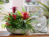 White bowl with Guzmania, Vriesea, Ficus pumila 'Sunny'