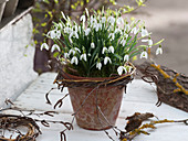 Galanthus in clay pot, small wreath of branches