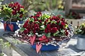 Primula Belarina 'Valentine' with wreath from Salix