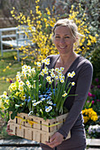 Woman bringing woodchip basket with Narcissus 'Minnow', Primula elatior