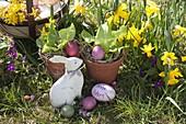 Ostern im Garten : natürlich gefärbte Ostereier , Salat (Lactuca) in Tontöpfen