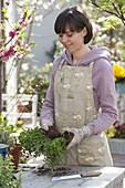 Woman dividing oregano and pots again