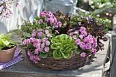 Edible spring wreath, primula 'romance' (stuffed primrose)