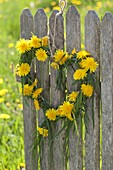 Heart made of grasses and taraxacum (dandelion) hung on fence