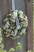 White wreath of apple blossoms (Malus)