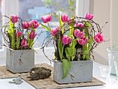 Gray boxes with Tulipa (tulip), bark as plug-in aid