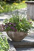 Viola cornuta, lemon balm, chives