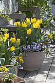 Spring Terrace with Tulipa 'Yellow Flight', Muscari 'Magic Mix'