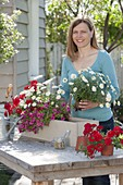 Woman planting balcony flower box with Verbena vepita 'Fire Red'