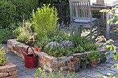 Raised bed of old bricks planted with herbs
