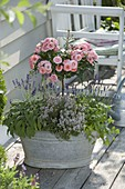 Old zinc buckets planted with pink (rose stems), lavender