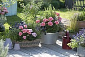 Basket box and metal bowl with Pelargonium zonal